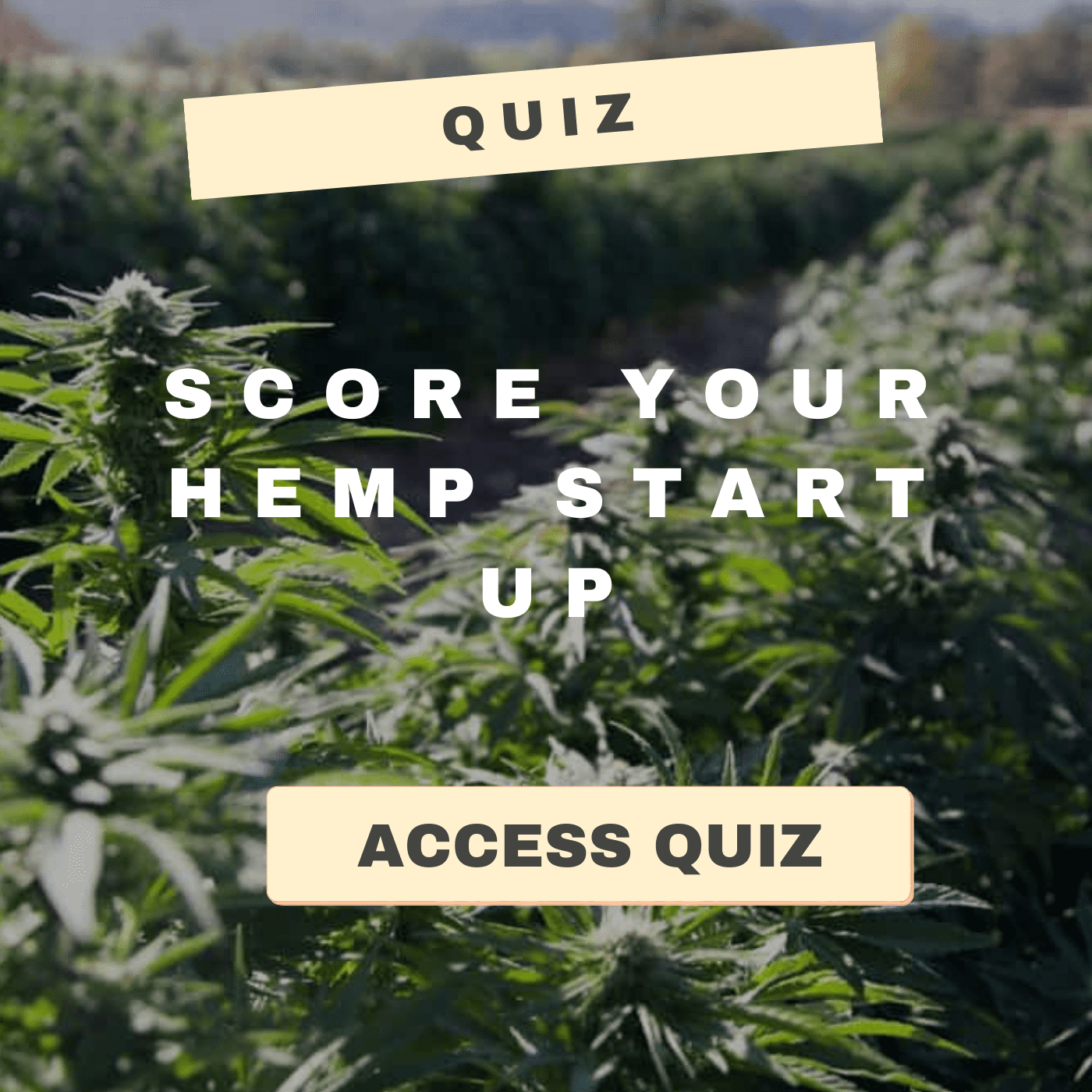 hemp start up quiz