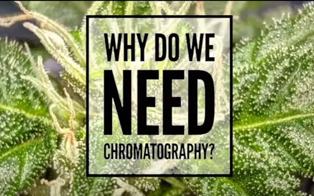 Chromatography Explained | Podcast